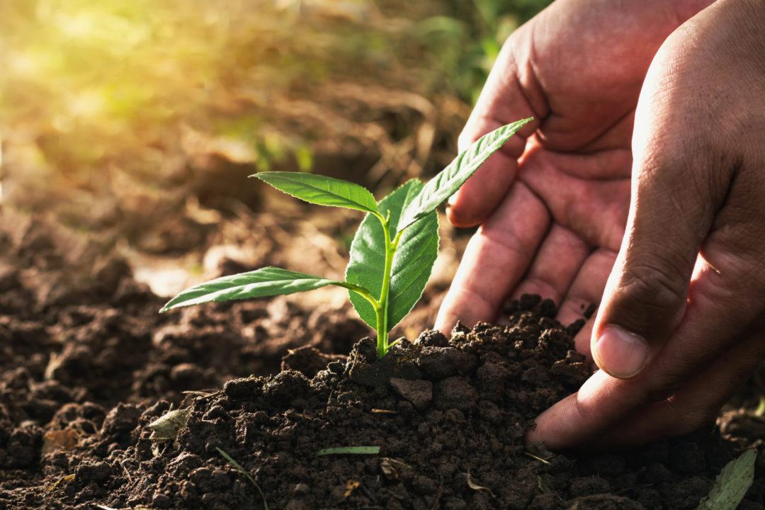 کمیسیون ماده 56 قانون حفاظت و بهره برداری از جنگل ها و مراتع