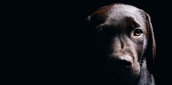 جرم حیوان آزاری در قانون چیست؟